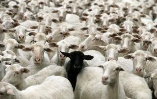 sheep-herds-around-the-world-20-600x376